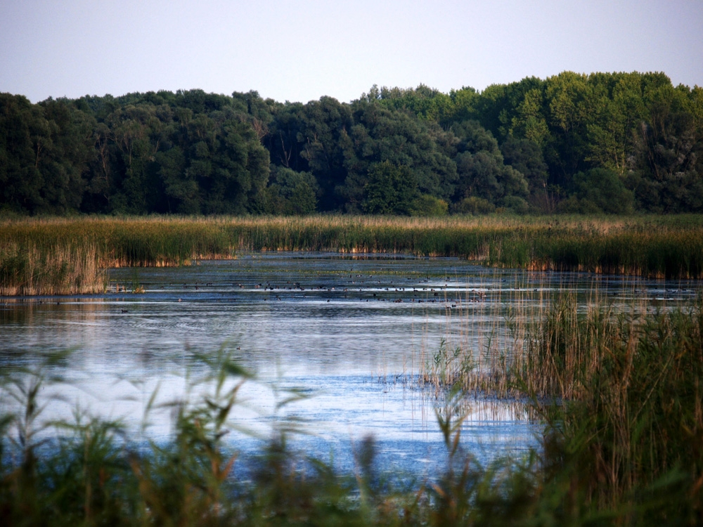 Gornje Podunavlje