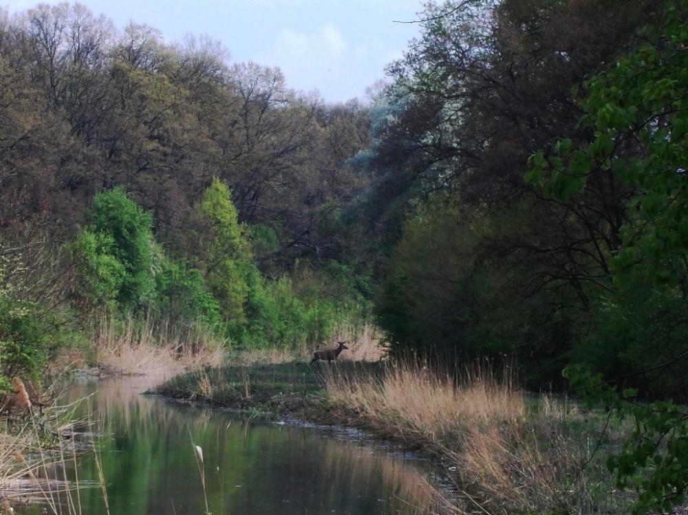 Gornje Podunavlje Monostor